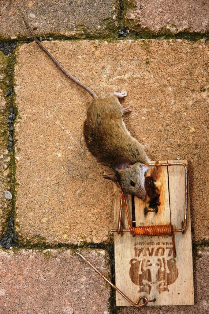 hans dornseiffen natuurfoto's dode muis