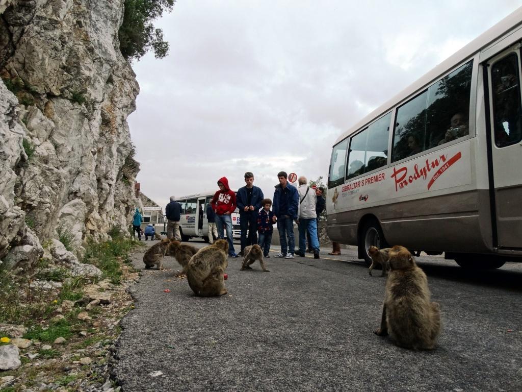hans dornseiffen natuurfoto's apen Gibraltar